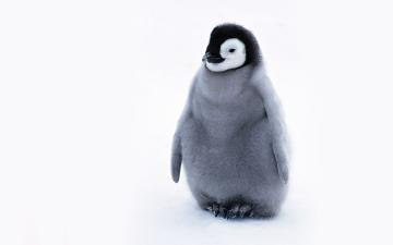 Cute Penguin   Penguins Wallpaper 24143954