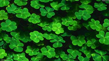 clover pictures Wallpaper Wallpapers Desktop Wallpaper HD