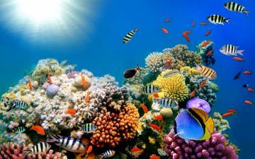 Ocean Coral Desktop Backgrounds chillcovercom Underwater Ocean