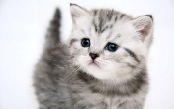 cute kitten kitten pussy cat uploaded silvery 2010 10 30