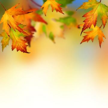 autumn leaves backgrounds wallpapers autumn leaves picturejpg