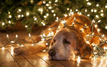 christmas new year lights bright animals dogs humor funny wallpaper