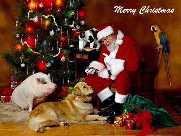 christmas santa and animals wallpaper Friends in Need Animal Rescue