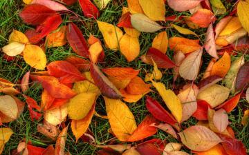 Autumn Leaves Wallpaper Hd Autumn leaves