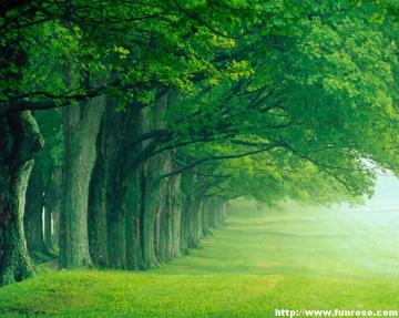bestnaturewallpaper green nature wallpaperjpg