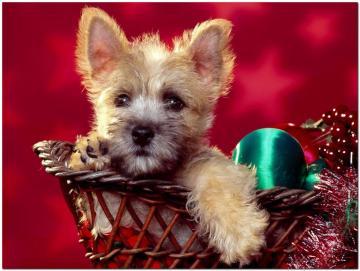 christmas craciun Christmas animals
