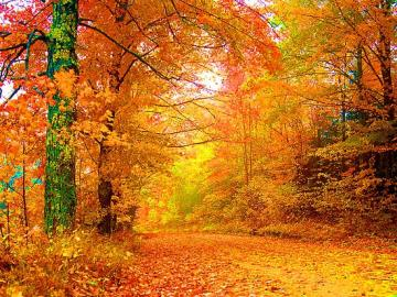 19 2015 Author Ankit Categories Wallpapers Pictures Tags Autumn