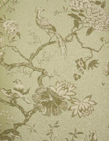 Wallpaper Maza bird wallpaper for walls