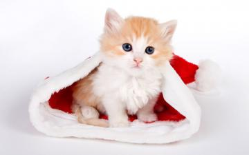cute cat wallpapers cute cat desktop wallpaper cat desktop