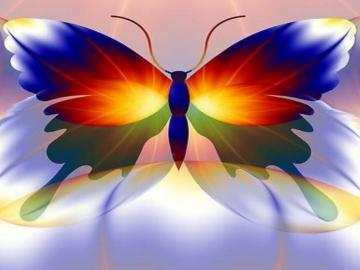 Amazing Colorful Butterfly Wallpaper 1024x768 Full HD Wallpapers