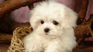 Cute dog hd wallpapers for girls desktop wallpaper