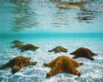 Amazing Animated Desktop Wallpaper Beach Detail Photo