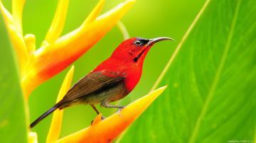 Birds Screensavers And Wallpaper Birds Birds Wallpaper