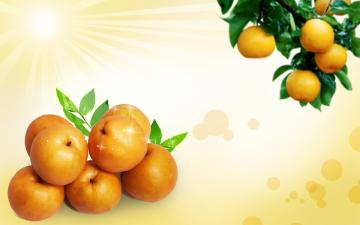 web fruit design image background wallpapers collections