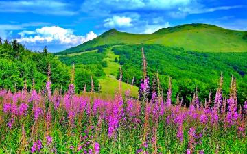 Spring Landscape Wallpapers The Art Mad Wallpapers