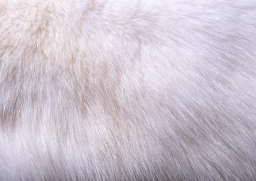 Download texture White fur texture background image