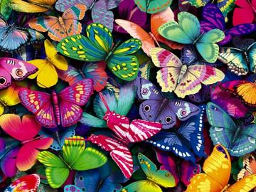 yorkshire rose images Butterflies wallpaper photos 15990936