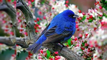 Birds Samsung Galaxy Note 3 Wallpaper Screensavers Backgrounds 6