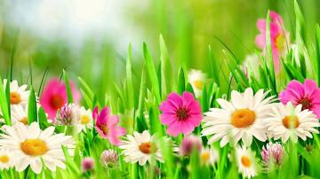 Wallpaper HD Beautiful Spring Cover photos Spring flowers