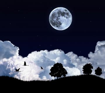 Moon Night Birds android HD wallpaper