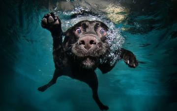 Amazing Underwater Dog HD Wallpaper