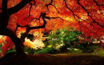 Beautiful Autumn Red Leaves HD Wallpaper