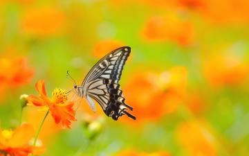 rating give colorful butterfly background 1 5 give colorful butterfly