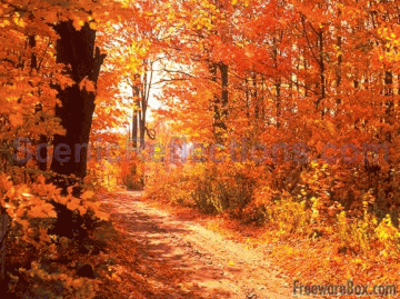 freewareboxcomscreenshot 905 colors of autumn free screensaverhtml