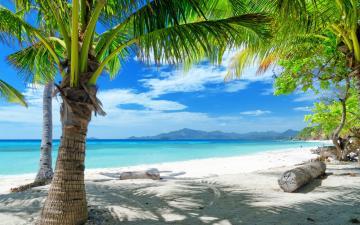 Tempting ocean beach with palm trees HD Desktop Wallpaper HD Desktop