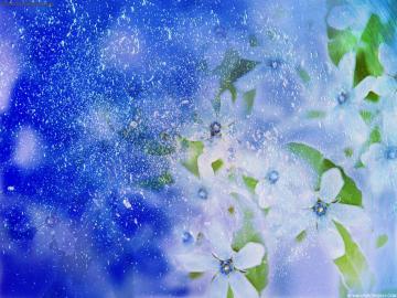 natural flower wallpaper hd wallpapers natural flower wallpaper hd