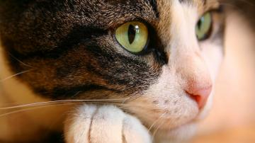 Cat Eyes Wallpapers HD Wallpapers