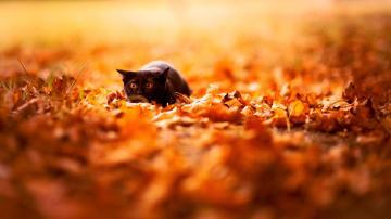 Fall Desktop Wallpaper Hd Autumn leaves