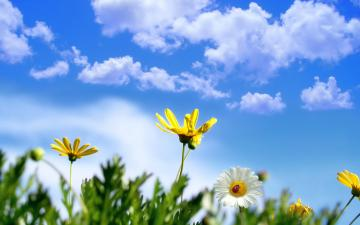 backgrounds wallpaper spring photo flower flowers gamesdesktop