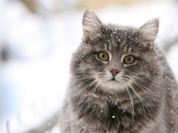 Cute cat in the snow desktop wallpaper Programming Resource Center