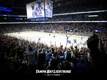 Tampa Bay Area Information and Attractions   Gulf To Bay Group Real