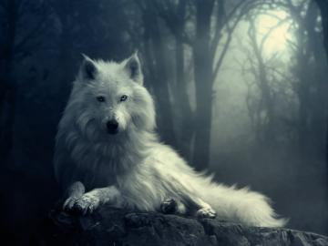 wolf wallpapers download incredible hd widescreen wallpapers of