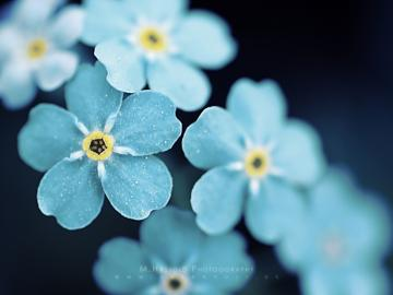 60 Beautiful Flowers Wallpapers [Wallpaper Wednesday]   Hongkiat