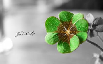 Four Leaf Clover   Wallpaper High Definition High Quality