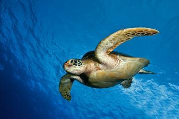 Ocean Animals Desktop Backgrounds wallpaper Ocean Animals Desktop