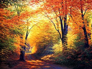 Happy First Day Of Fall Autumn desktop wallpaper
