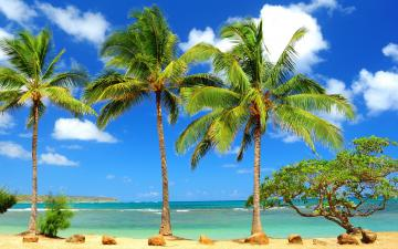 Tree Window Desktop Wallpapers Palm Tree Window Desktop Backgrounds