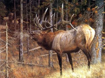 deer wallpaper deer images and animal desktop backgrounds 100