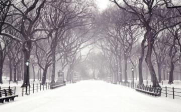 Winter Snow Animated Wallpapers multimedia gallery