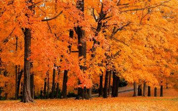 Fall Wallpapers Fall Computer Background