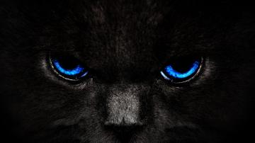 Blue Eye Cat HD Wallpaper