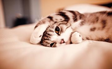 Cute Cat Sleep Wallpaper Desktop 5425 Wallpaper High Resolution