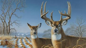 deer Wallpaper Background 3126