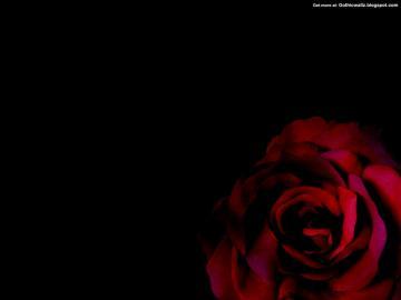 Gothic Rose   Dark Gothic Wallpapers   FREE Gothic Wallpaper   Dark