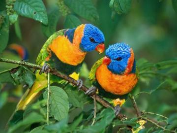 User reviews of Bright Birds Screensaver 102