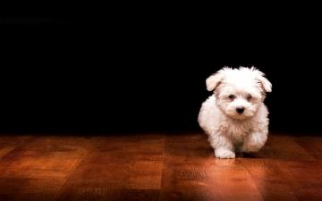 Dogs Wallpapers HD Pictures One HD Wallpaper Pictures Backgrounds